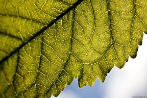 Back Light Leaf2