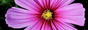 PinkFlower Crop