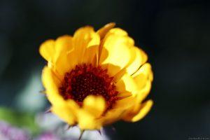 Yellow InsideFocus